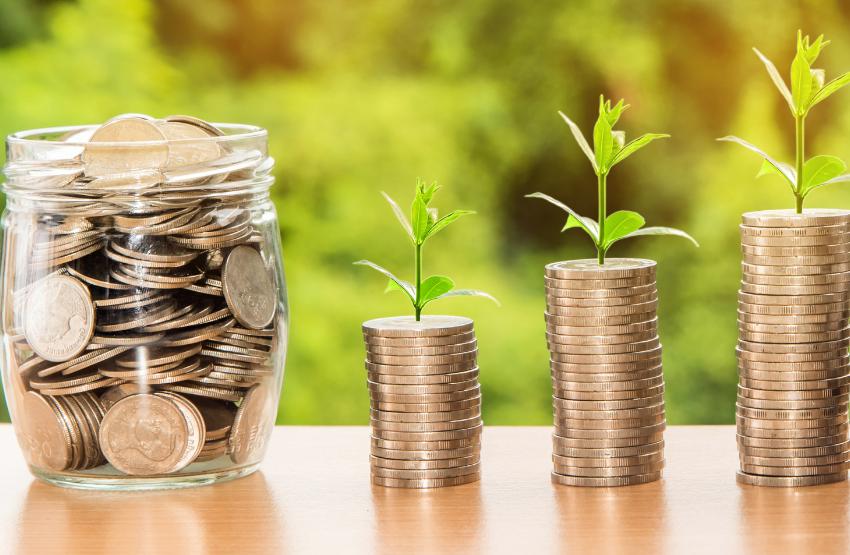 pénz növény